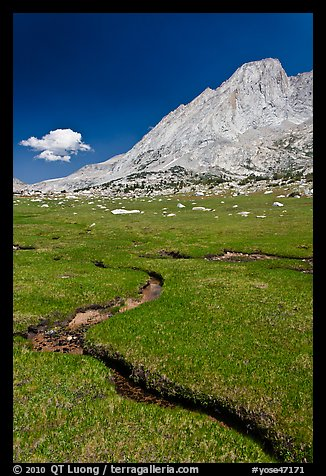 Alpine meadows, meandering stream, and Mount Conness. Yosemite National Park (color)