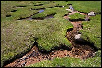 Meandering stream in grassy alpine meadow. Yosemite National Park, California, USA. (color)