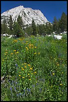 Flowers, forest, and peak. Yosemite National Park, California, USA. (color)