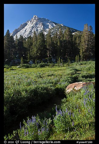Sub-alpine landscape with stream, flowers, trees and mountain. Yosemite National Park (color)