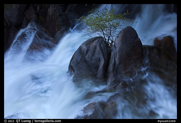 Tree on boulders surrounded by tumultuous waters, Cascade Creek. Yosemite National Park (color)