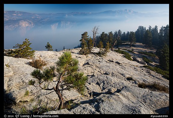 Pine sapling on Sentinel Dome, Valley in smoke. Yosemite National Park (color)