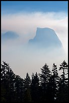 Half-Dome and Clouds Rest in fog above tree line. Yosemite National Park ( color)