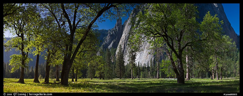 El Capitan Meadows, Black Oaks and Cathedral Rocks. Yosemite National Park (color)