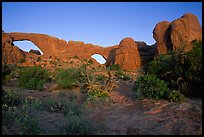 Wildflowers, South window and North window, sunrise. Arches National Park, Utah, USA. (color)