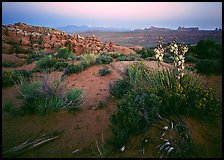 Yucca, Fiery Furnace, and La Sal Mountains, dusk. Arches National Park, Utah, USA. (color)
