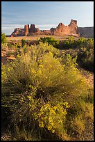 Shrub, cottonwoods and sandstone towers. Arches National Park ( color)