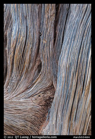 Detail of juniper bark. Arches National Park (color)
