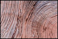 Close-up of juniper bark. Arches National Park, Utah, USA. (color)