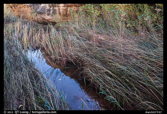 Creek and grasses flattened by water, Courthouse Wash. Arches National Park (color)