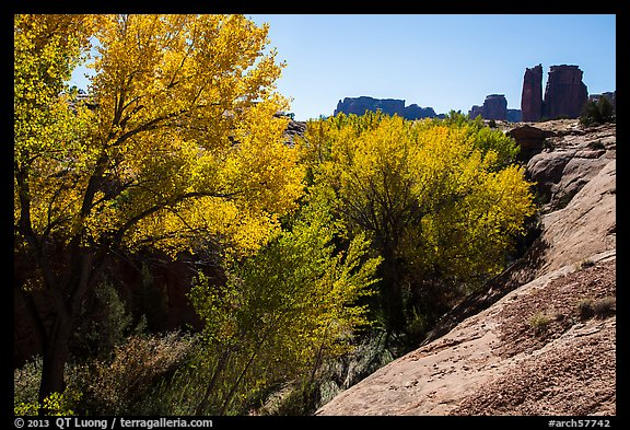 Cottonwoods in fall, Courthouse Wash and Towers. Arches National Park (color)
