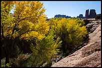 Cottonwoods in fall, Courthouse Wash and Towers. Arches National Park, Utah, USA. (color)