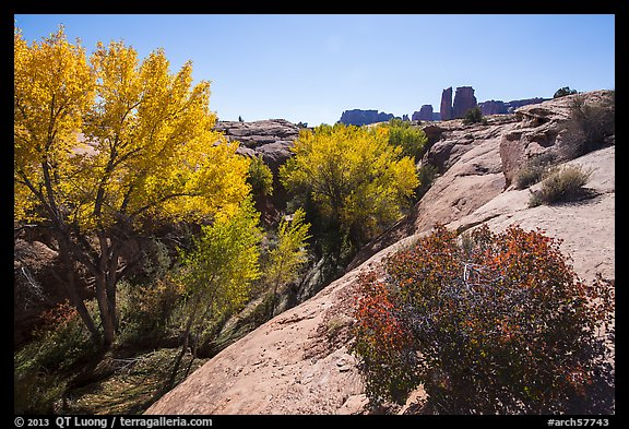 Bush and cottonwoods in autumn, Courthouse Wash and Towers. Arches National Park (color)