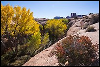 Bush and cottonwoods in autumn, Courthouse Wash and Towers. Arches National Park, Utah, USA. (color)