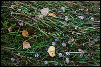 Ground view: Wildflowers, fallen leaves, and grasses, Courthouse Wash. Arches National Park, Utah, USA. (color)