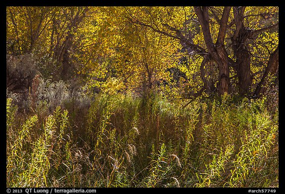 Riparian environment in autumn, Courthouse Wash. Arches National Park (color)