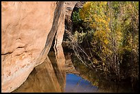 Cliffs and riparian vegetation reflected in stream, Courthouse Wash. Arches National Park, Utah, USA. (color)