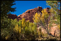 Cottonwood trees in autumn framing cliffs, Courthouse Wash. Arches National Park, Utah, USA. (color)