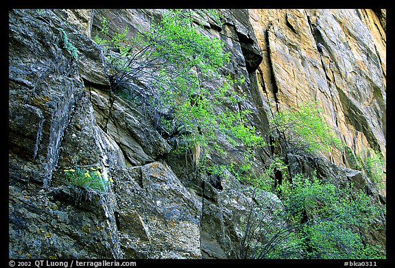 Side canyon wall, Long Draw. Black Canyon of the Gunnison National Park (color)