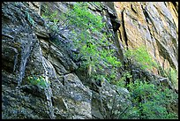 Side canyon wall. Black Canyon of the Gunnison National Park, Colorado, USA. (color)