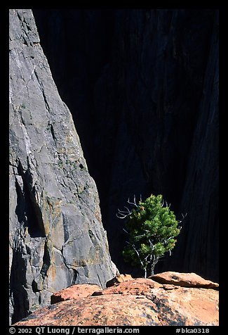Tree on rim near exclamation point. Black Canyon of the Gunnison National Park (color)