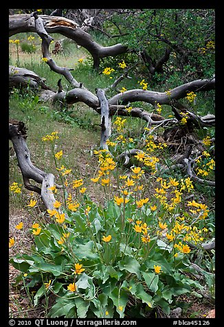 Flowers and fallen branches, High Point. Black Canyon of the Gunnison National Park (color)
