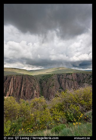 Flowers, canyon, and menacing clouds, Gunnison Point. Black Canyon of the Gunnison National Park (color)