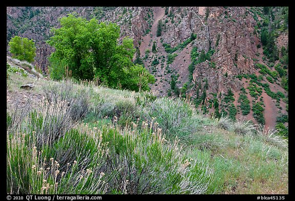 Grasses and canyon walls, East Portal. Black Canyon of the Gunnison National Park (color)
