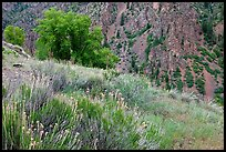 Grasses and canyon walls, East Portal. Black Canyon of the Gunnison National Park, Colorado, USA. (color)