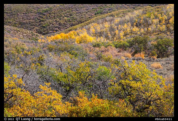Hills with trees in autumn color. Black Canyon of the Gunnison National Park (color)