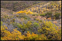 Hills with trees in autumn color. Black Canyon of the Gunnison National Park, Colorado, USA. (color)