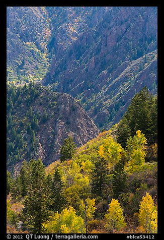 Trees in autumn foliage and canyon. Black Canyon of the Gunnison National Park (color)