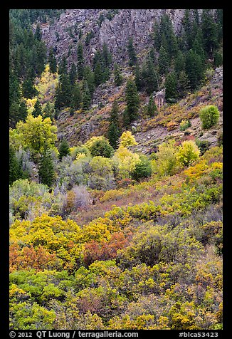 Slopes with Douglas fir and shrubs. Black Canyon of the Gunnison National Park (color)