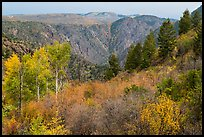 Shrubs and trees in fall color on canyon rim. Black Canyon of the Gunnison National Park, Colorado, USA.