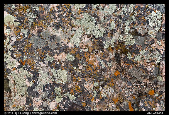 Close-up of lichen on rock. Black Canyon of the Gunnison National Park (color)