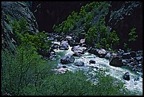 Spring vegetation along  Gunisson river near  Narrows. Black Canyon of the Gunnison National Park, Colorado, USA.