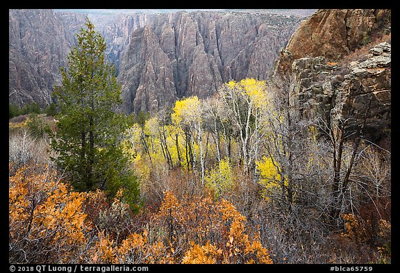 Fall foliage color and canyon walls. Black Canyon of the Gunnison National Park (color)