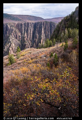 Gambel Oak and serviceberries color slopes above the canyon. Black Canyon of the Gunnison National Park (color)