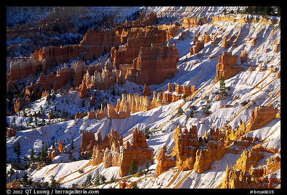 Hoodoos and snow in Bryce Amphitheater, early morning. Bryce Canyon National Park (color)