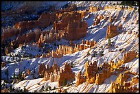 Hoodoos and snow in Bryce Amphitheater, early morning. Bryce Canyon National Park, Utah, USA. (color)