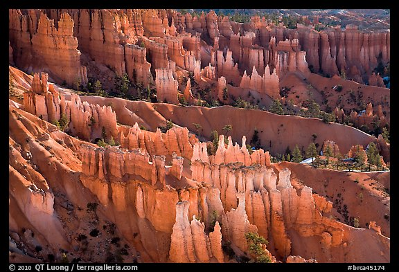 Glowing hoodoos in Queen's garden. Bryce Canyon National Park (color)