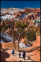 Hiking into amphitheater. Bryce Canyon National Park, Utah, USA. (color)