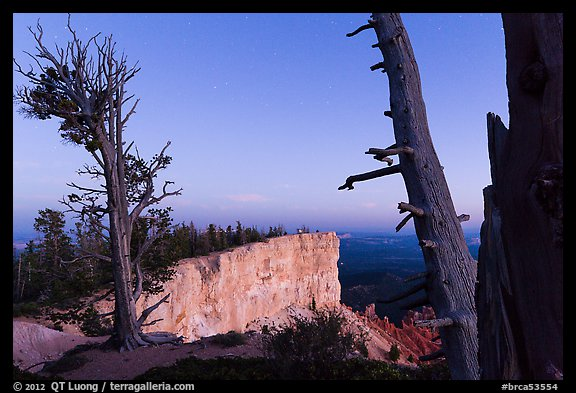 Bristlecone pine trees and cliff at dusk. Bryce Canyon National Park (color)