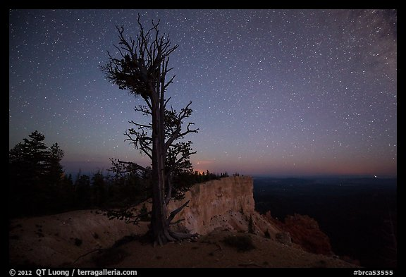 Bristlecone pine at edge of plateau at night. Bryce Canyon National Park (color)