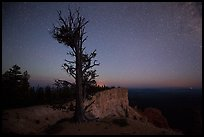 Bristlecone pine at edge of plateau at night. Bryce Canyon National Park ( color)