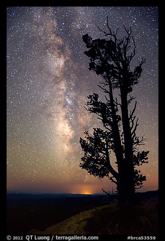 Bristlecone pine tree and Milky Way. Bryce Canyon National Park (color)