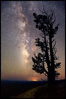 Bristlecone pine tree and Milky Way. Bryce Canyon National Park ( color)