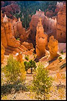 Aspen and Thors Hammer in autumn. Bryce Canyon National Park, Utah, USA.