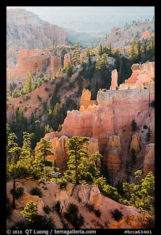 Trees, ridges, and hoodoos, Fairyland Point. Bryce Canyon National Park (color)