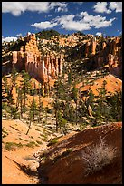 Hill with hoodoos, Fairyland Loop. Bryce Canyon National Park ( color)